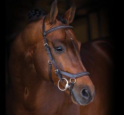 horsebdfp